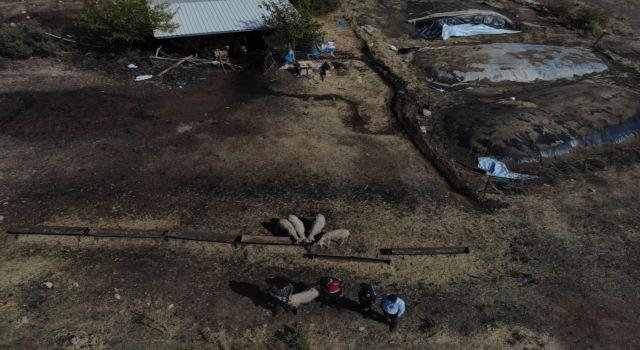 Kayıp Koyunları Drone Buldu